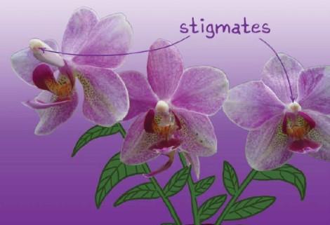 ticarttoc_3_edito_stigmates